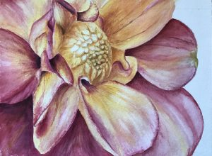 Flower close up watercolor